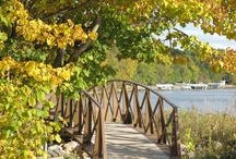 Favorite Autumn Photos / by Deanna Lynn Sletten