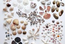 Beach collections