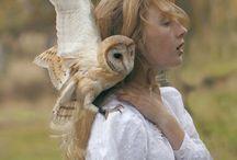 owl moodboard