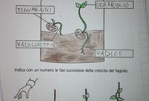 Scienze a scuola