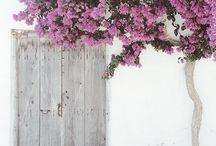 Πόρτες Παραθύρια