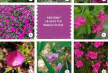 2014 COLOR / Radiant Orchid, Enchanting Plum