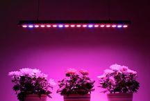 Фитолампы для роста растений / Любое растение не может жить без света, им приходится тяжело в темные зимние месяцы, так как солнечного света не хватает. Помогут растениям развиваться правильно специальные фитолампы, они излучают необходимый для фотосинтеза спектр.  Светодиодные фитосветильники  не нагреваются, не вызывают у растения тепловых ожогов и обычно могут располагаться как угодно близко к листьям. Также необходимо отметить, что использование светодиодов снижает испарение, приводя к удлинению периодов между поливами.