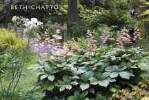 Садовые растения, хорошо растущие в тени