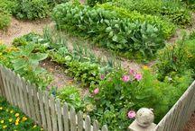 vihannes puutarha