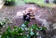 Ron The Rottweiler / follow the adventures of Ron, a Rottweiler puppy very friendly and playful: http://www.youtube.com/playlist?list=PL1KM-rSCGf8fhr-jkrBgzKbZi3UGy-tXI #dog