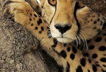 Schönstes Tier der Welt