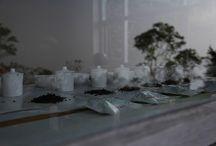 Tea Tasting Tea Cupping