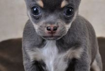 Chihua Whoua !!!