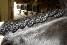 pferde frisuren