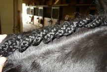 Horses / Horses things, info