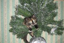 Christmas Cats / Festive Felines!