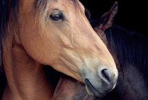 Paarden / Een zijn met je paard, de verbinding voelen, harmonie ervaren!