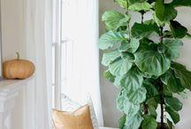 Enteriőrök növényekkel