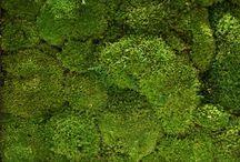 Tundra Moss / The touch of a soft surface  Het mos van de Tundra weet te overleven in de meest extreme omstandigheden. De toepassingen van dit mos zijn legio. Met hun vele groentinten vormen ze een organische wand. Een mooi alternatief voor levende planten en een natuurlijke blikvanger voor ieder interieur.