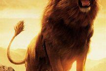 Projekt lew