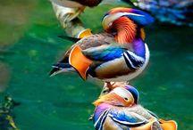 Vizí és gázló madarak