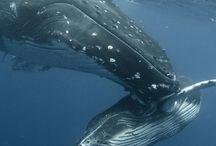 Tatoo whale