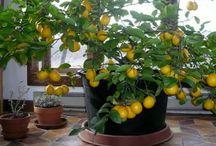záhradka,pestovanie