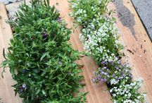 Grow + Garden  / by Heather Diggs