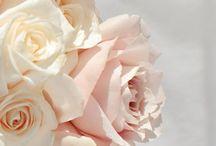 Rosor / Blommor