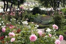 Gardens / A virtual garden tour of beautiful and inspiring gardens.   / by Deb C