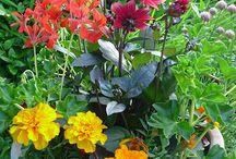 Border: Jewel Garden