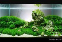 aquarium / by Michelle Murphy