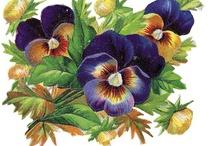 Virág quilling