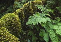Tendencia studied fern