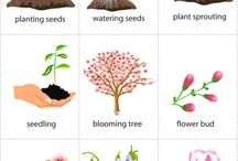 Spring Planting Unit / by Laurie Moulton (Elementary ESL)