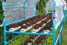 growing hydroponics