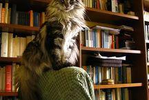 Cats  / by Westridge AH