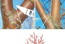Curățirea pomilor
