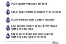 Pet Food Recipes