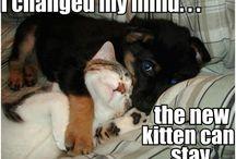 Cute Puppys en Kittens