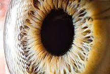 Eyes... Human iris...