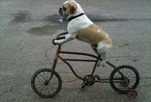 Dog!!♥