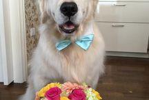 My Doggy Gatsby