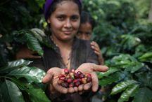 Fairtrade America News / All the latest happenings at Fairtrade in the United States / by Fairtrade America
