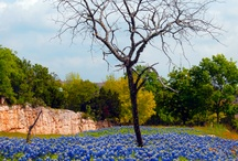 Texas Bluebonnets and Wildflowers / by Fred Arechiga