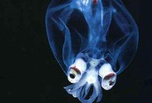 marine organism