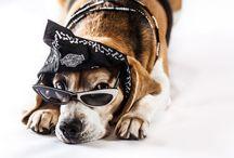Carlotta Dog Biker / Photoshoot 2012 by Nino Bartuccio