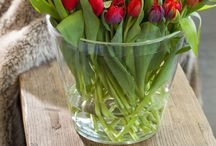 Цветы / Тюльпаны