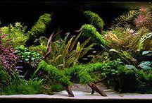 My aquarium obsession / by Jessica Leebelt