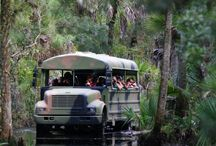 Things to do in SW Florida!!