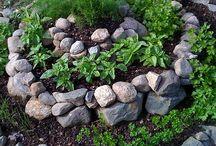 Zahradničení, které miluju / gardening