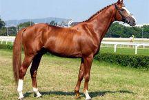 ló /sport lovak/