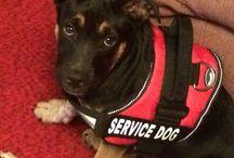Service Dog Stuff
