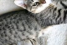 Kate Spain's gorgeous kitties / franny and lou are soooo beautiful ! / by daisy and jack